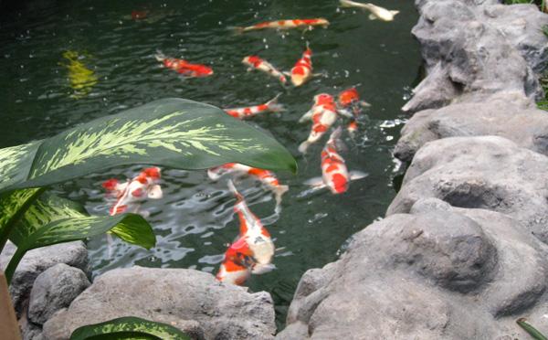 Hồ cá chính của mình.