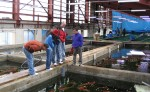 Marusei Koi Farm Greenhouse