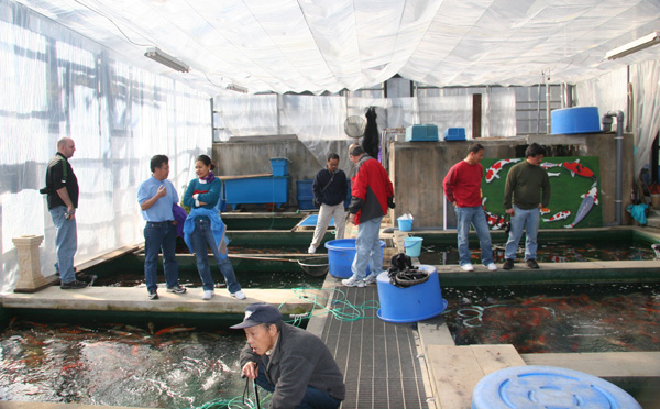 Hosokai Koi Farm Greenhouse.