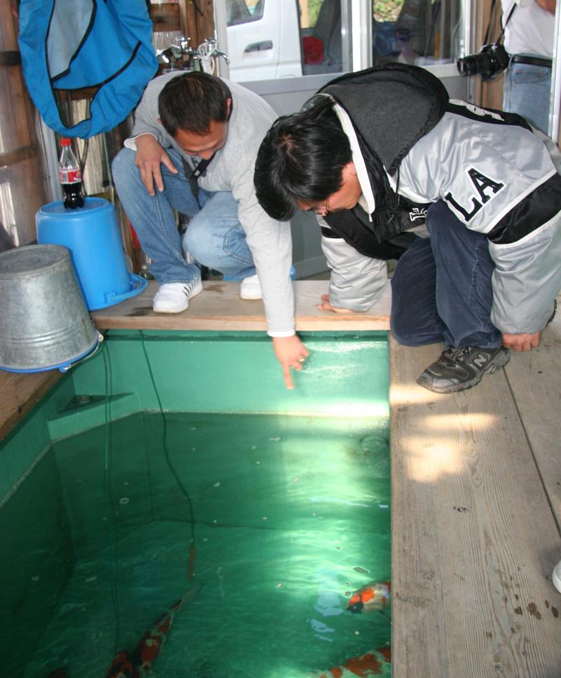 Igarashi Koi Farm Indoor Pond.